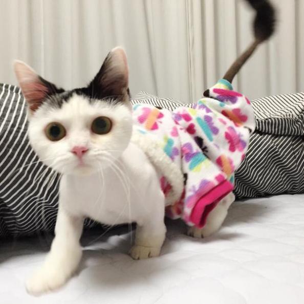minhyuk cat-1