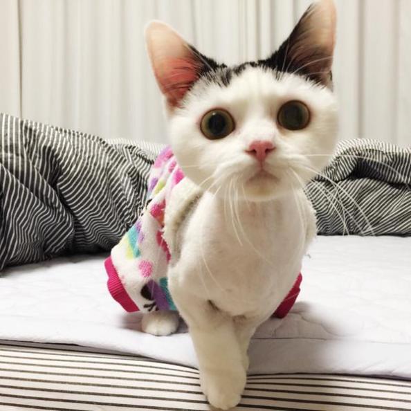 minhyuk cat-2