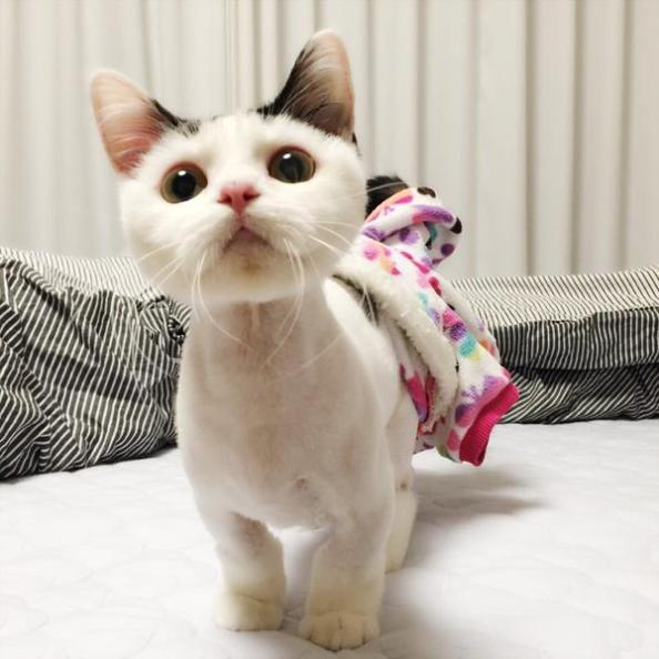 minhyuk cat-3