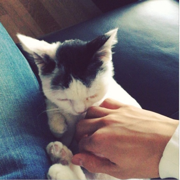 ttatta - minhyuk's cat